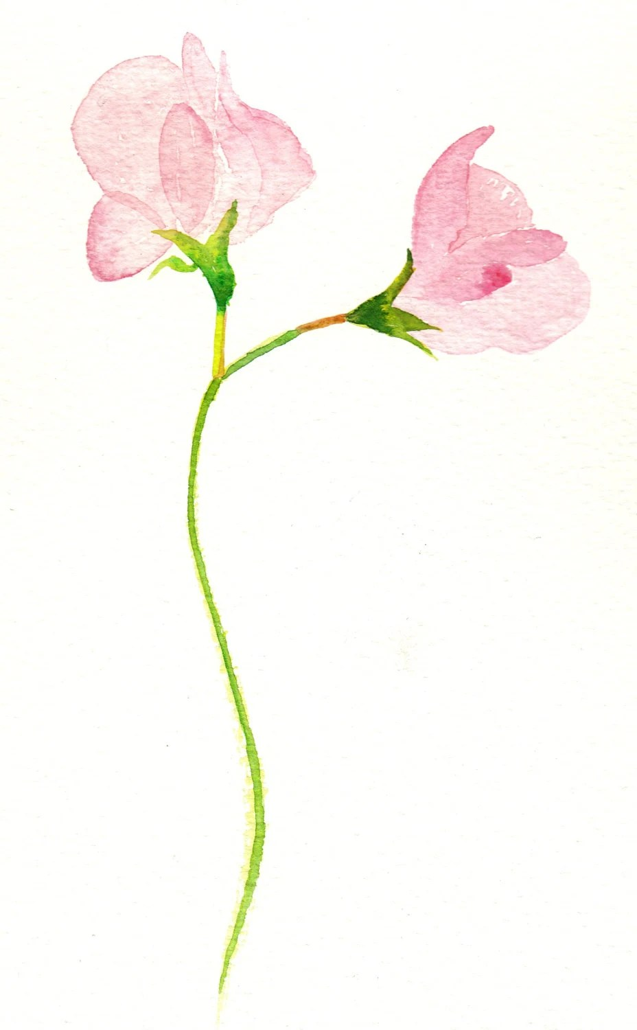 Watercolor Cards Sweet Pea Cards Flower Cards Watercolour