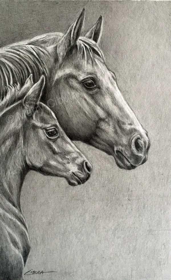 Equine Art. Original Graphite Pencil Drawing Of