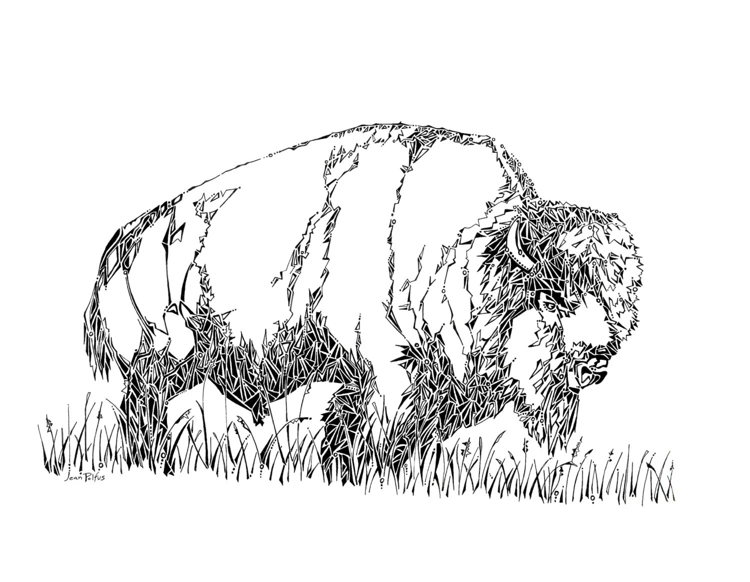 Bison Drawing Buffalo Bison Illustration Wild Animals