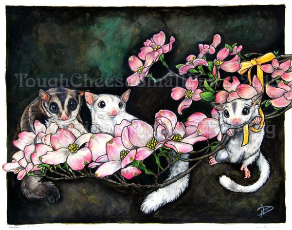 Sugar Glider Pictures to Print and Color
