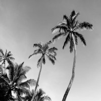 Black and White Wall Art, Palm Trees, Black and White