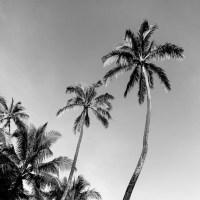 Black And White Tree Prints | www.imgkid.com - The Image ...