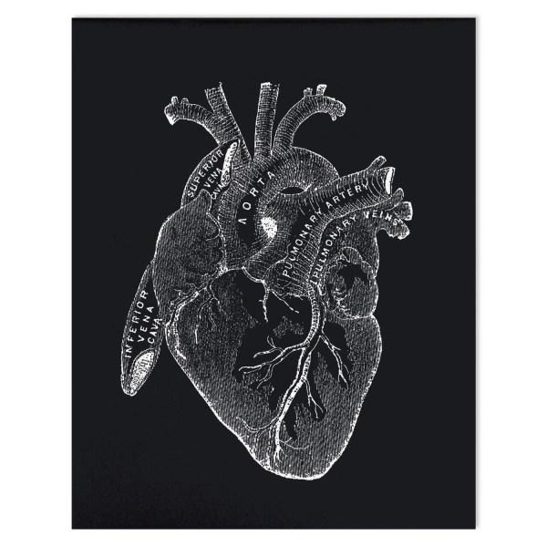 Anatomy Heart Print - Vintage Reproduction Poster. Black