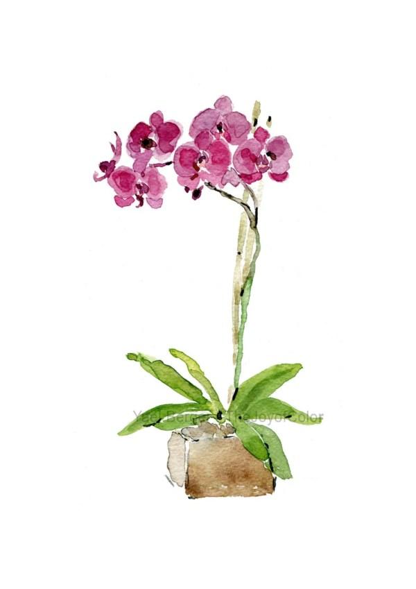 Orchid Plant Art Print Watercolor