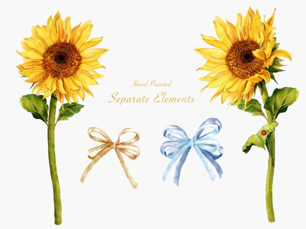 sunflower watercolor clipart summer