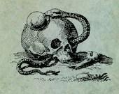 Memento Mori Skull Snake ...