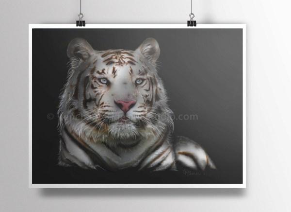 Tiger Poster Print Bengal Animal Art