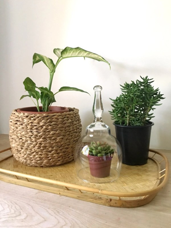 Large Glass Dome Cloche Terrarium Minimalist Display With Long