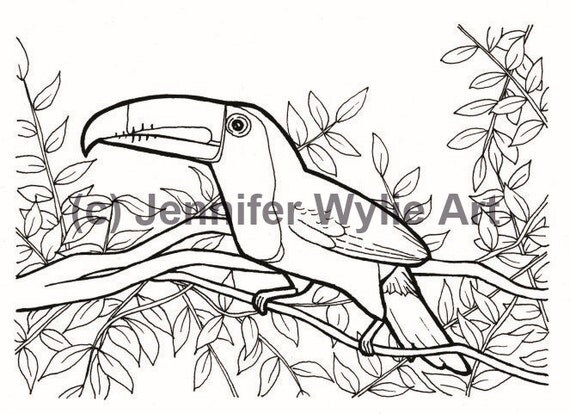 items similar to toucan sam bird adult coloring page