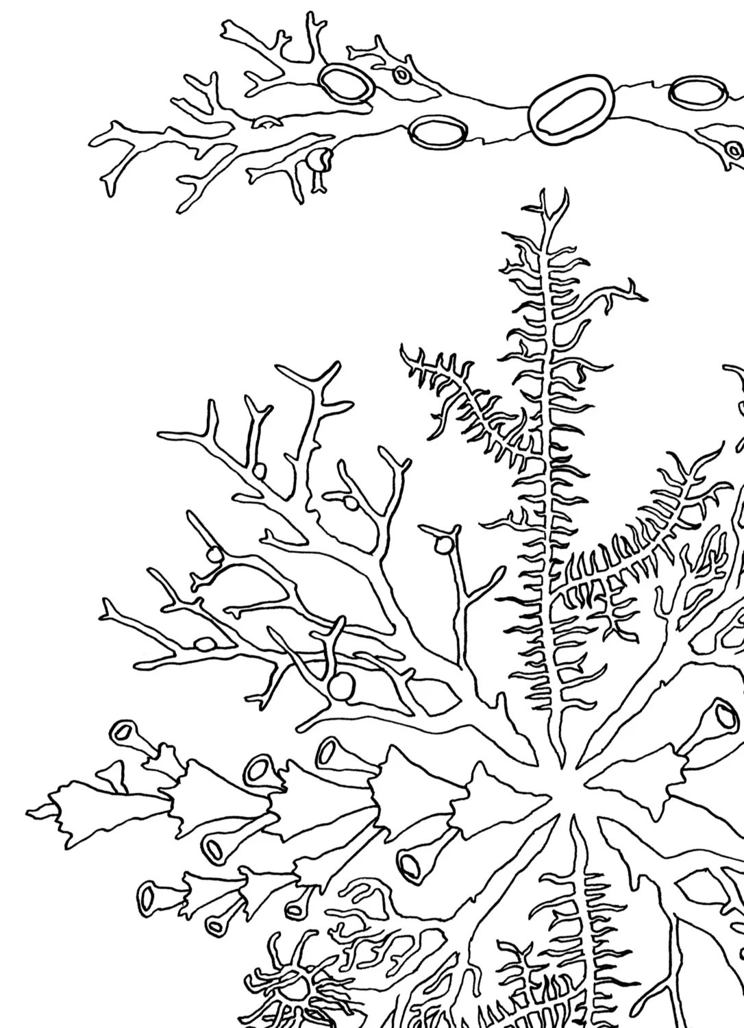Coloring book; Love Your Lichen Colouring Sheets Printable
