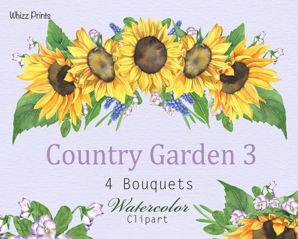 sunflower watercolor clipart floral