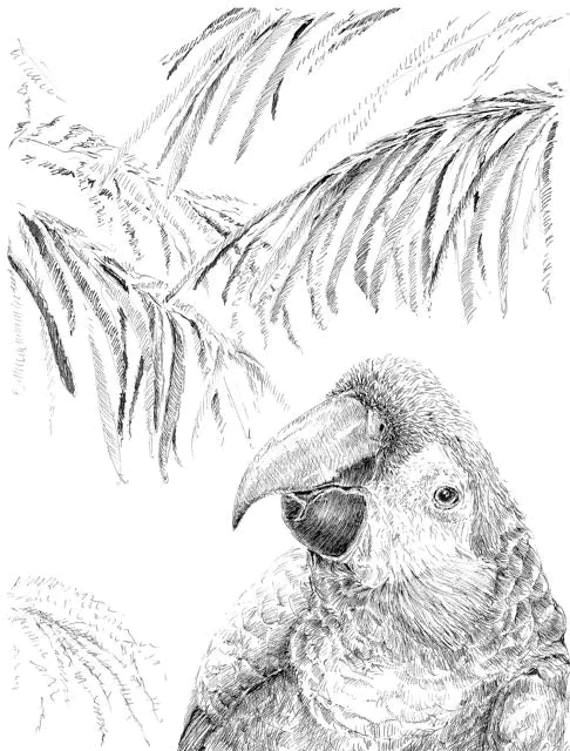 Pen and ink birds large parrot drawing black and white art