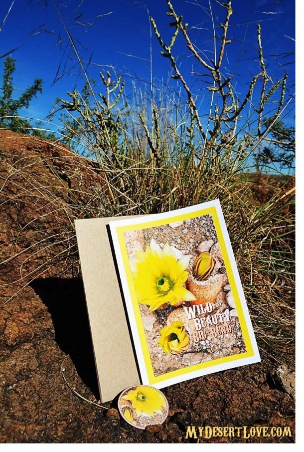 Texas Rainbow Cactus Phot...