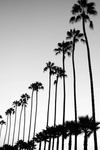 Black and White Photography, Palm Trees, Bathroom Wall Art