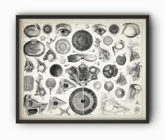 Vintage Eye Anatomy Print Antique Optician Poster Eye