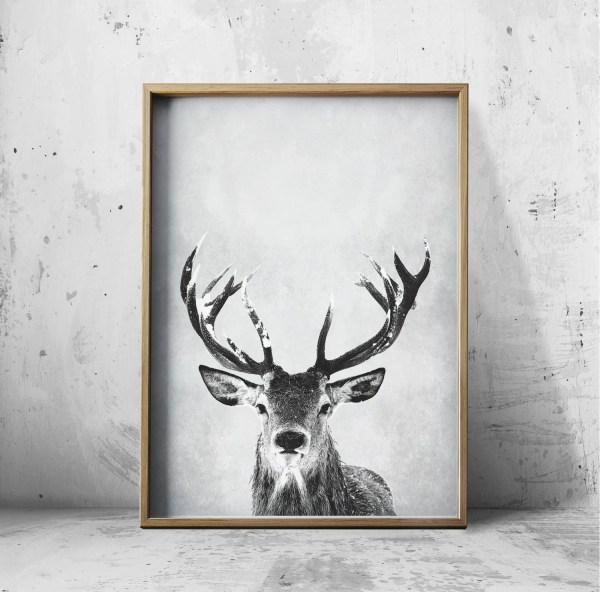 Deer Antlers Art Print
