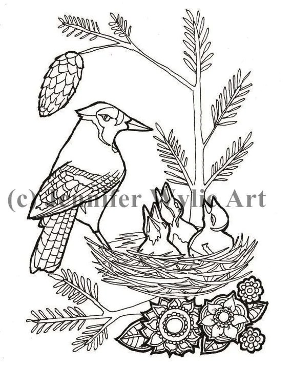 Blue Jays Colouring page Colouring Page Coloring Book