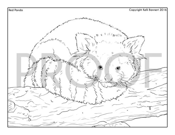 Red Panda Coloring Page by KelliBannert on Etsy