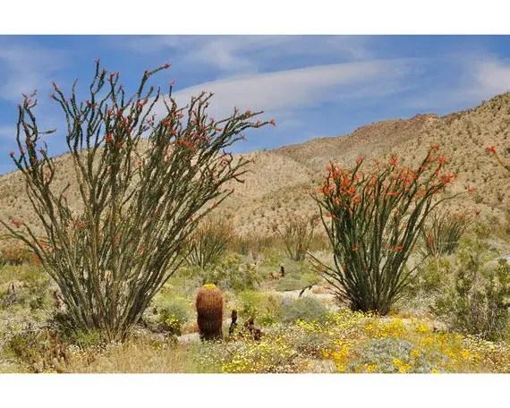 desert decor landscape ocotillo