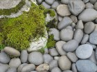 Moss and Gray Stones, Art Photography, Green and Gray, Nature Photo, stone pathway, natural landscape, zen art print, garden pathway
