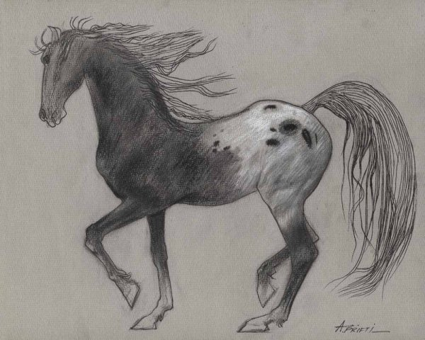 Original Horse Drawing 8.75x11.25 Small Pencil