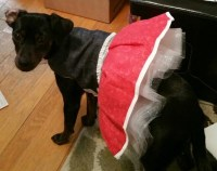 Medium dog dress