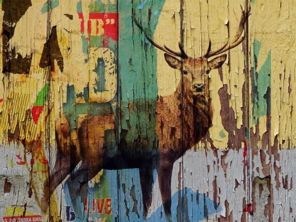 Deer Prints On Canvas