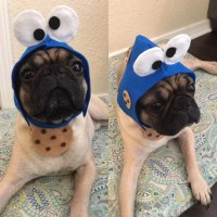 Cookie Monster Sesame Street Dog Costume
