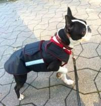 Boston Terrier Extra Warm Winter Dog Coat Dog Jacket