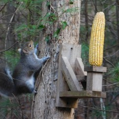 Squirrel Feeder Chair Best Ergonomic Under 300 Cedar Table And Chairsquirrel Feedercedar