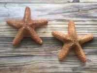 Large Beach Starfish Wall Decor Starfish Wall Hangings