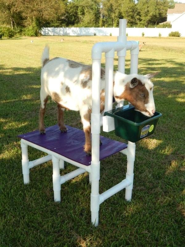 CHOICE of Color Custom Goat Milk Stand Nigerian Dwarf Pygmy