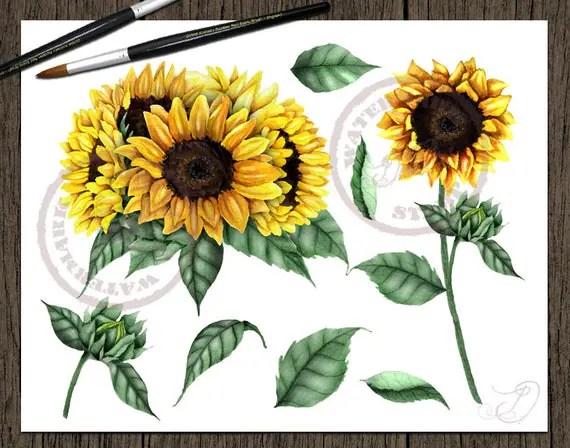watercolor sunflower clipart clip