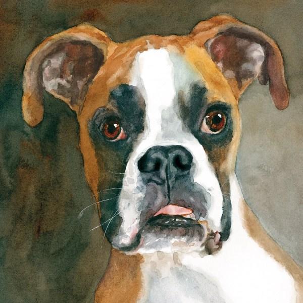 Boxer Print Of Watercolor Dog Painting Portrait Pet
