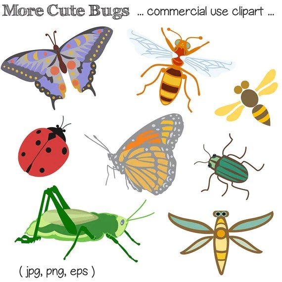bug clipart clip art insect
