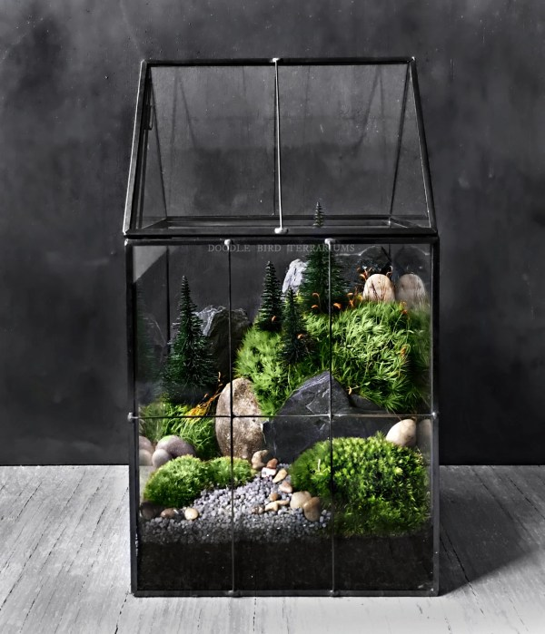 large greenhouse moss terrarium
