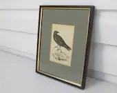 Antique raven print, fram...