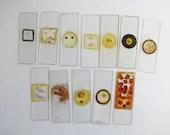 vintage microscopic slide...