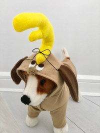 Small Dog Costumes Christmas Ideas - Myshelle.com