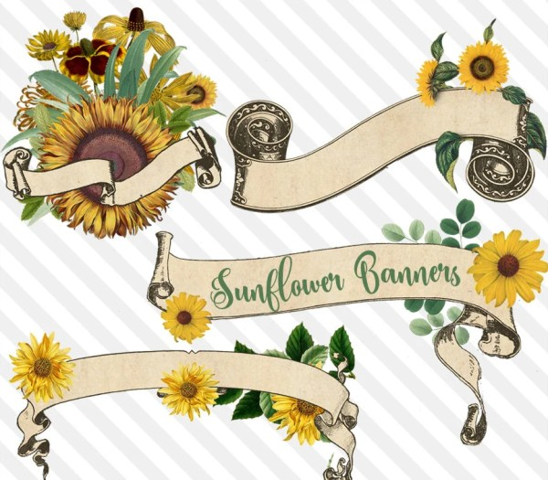 sunflower banners clipart vintage