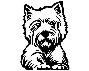 Yorkshire Terrier 3 Yorkie Dog Breed K-9 Pedigree Purebred