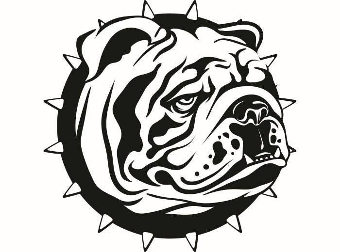 English Bulldog #6 American Mascot Head Spiked Collar Dog