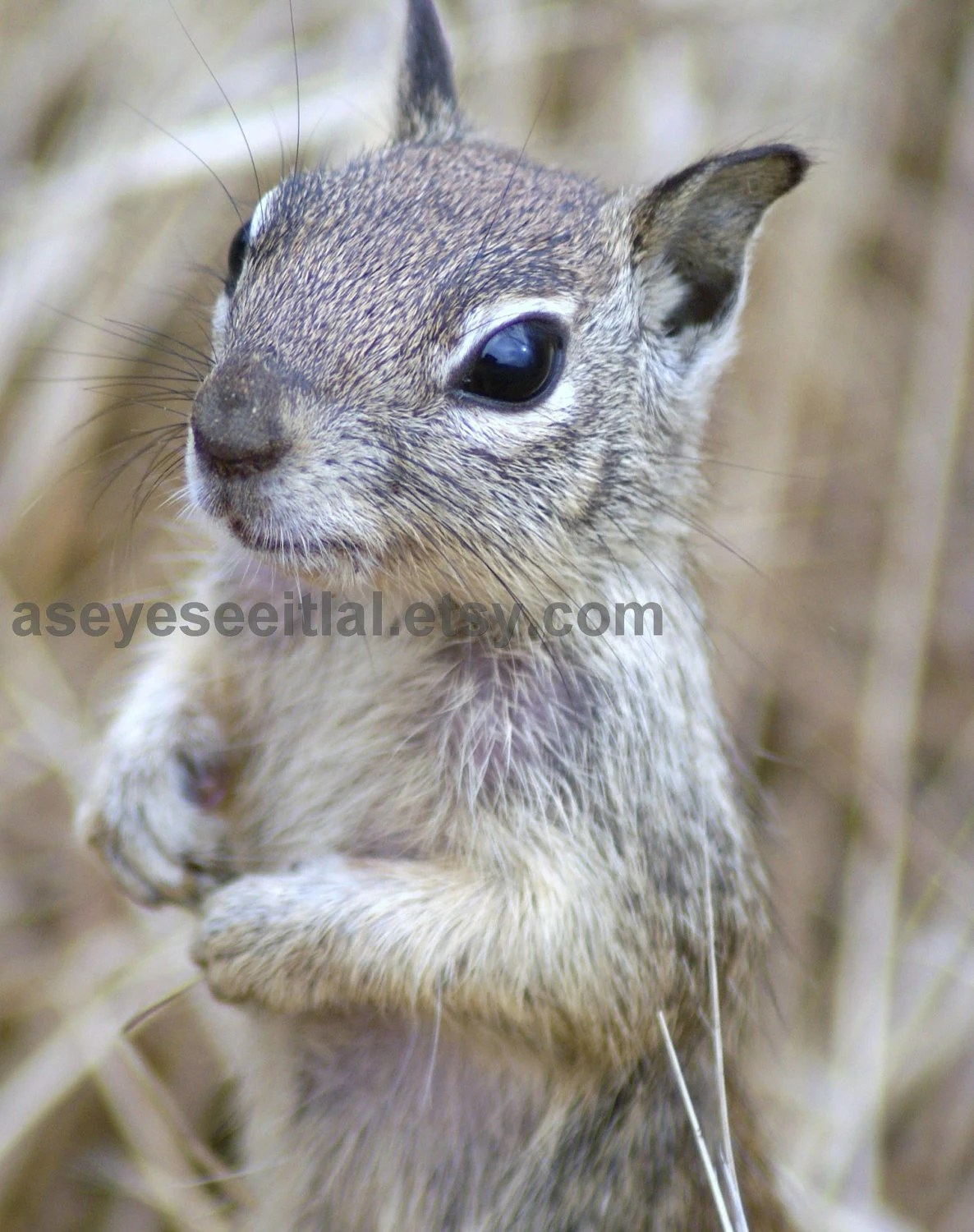 Hungry Squirrell  3 in Oceanside  CA 5x7 photo greeting card