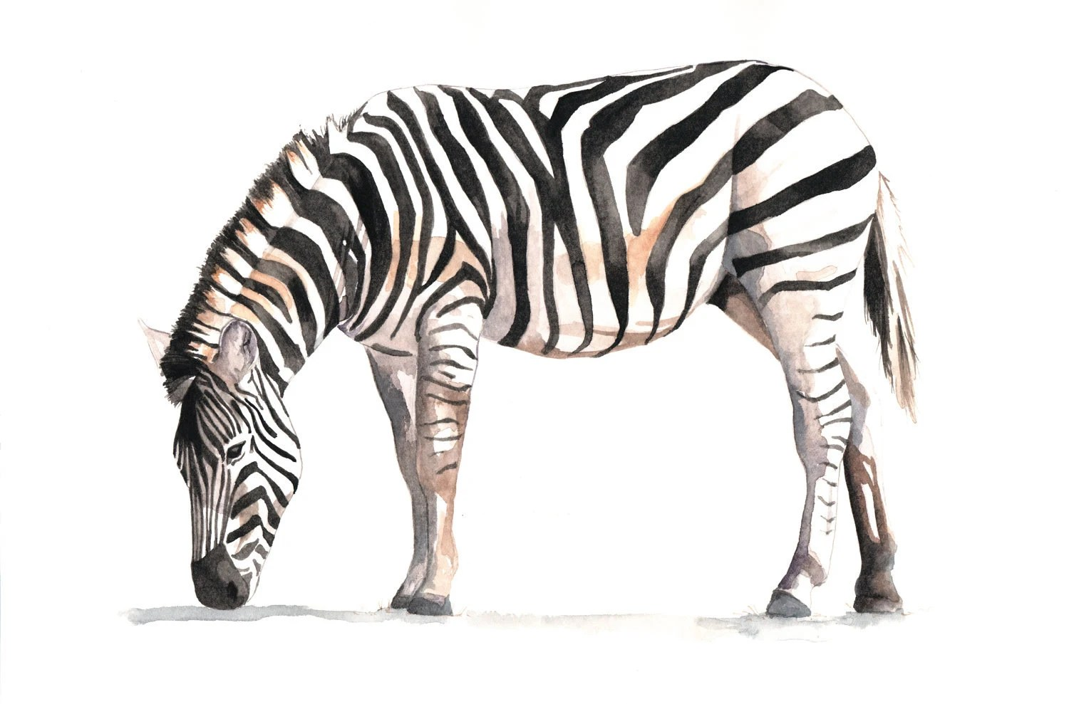 Zebra Painting print of Watercolor painting A4
