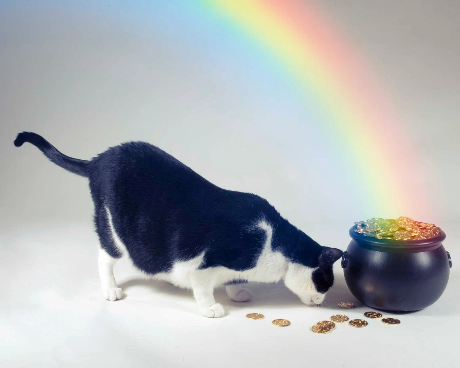 5x7 St. Patrick's day photo print pot of gold cat