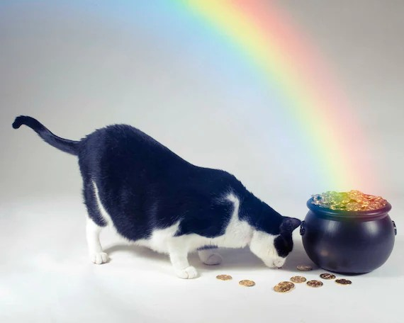 Special Guest Post: Black Cat St. Patrick's Day (5/6)