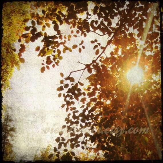 Autumn Sunlight print