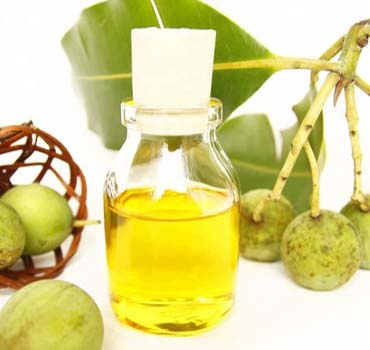 Tamanu Oil, Application : Hair, Skin at best price INR 1.60 kINR 2 k /  Kilogram in Ranchi Jharkhand from Agries Food Processing LLP   ID:5648993