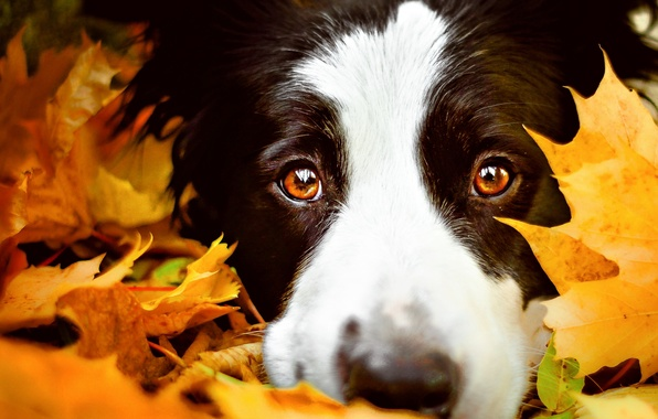 3rd Girls Wallpapers Wallpaper Autumn Eyes Look Face Leaves Close Up