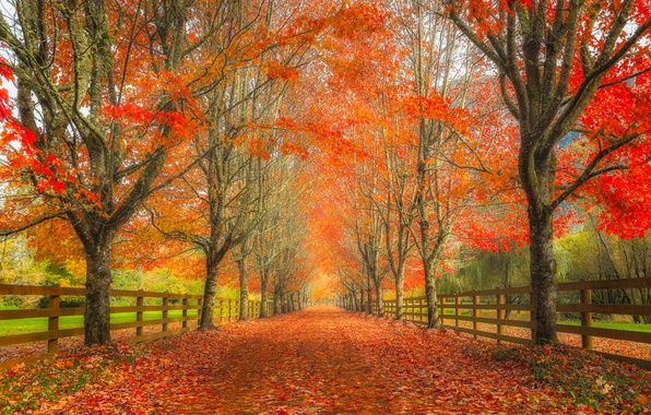 Free Fall Widescreen Wallpaper Wallpaper Road Autumn Leaves Trees The Fence Alley